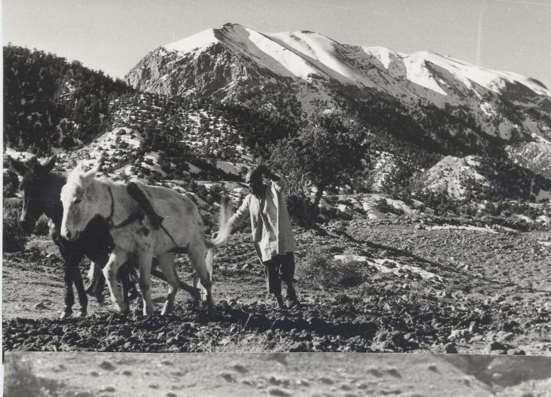 89traditionalploughingaytyahya.jpg