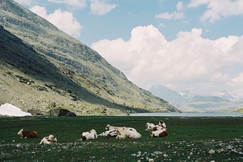 Site de rencontre badoo suisse